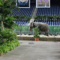 Sherrariums_Botanical_Oasis_Elephants1