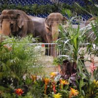 Sherrariums_Botanical_Oasis_Elephants2